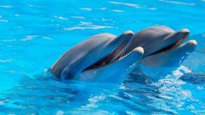 marineland dolphins